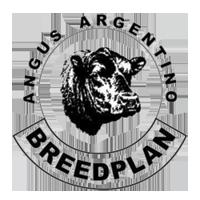 angus-argentino-breedplan-logo_transparent